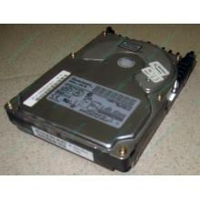 Жесткий диск 18.4Gb Quantum Atlas 10K III U160 SCSI (Калининград)